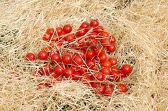 Körsbärsröd tomat på sugröret Royaltyfri Bild