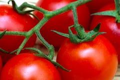 Körsbärsröd tomat-Solanum lycopersicum Arkivfoto
