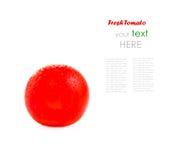 Körsbärsröd tomat som isoleras på vit bakgrund med prövkopiatext Fotografering för Bildbyråer