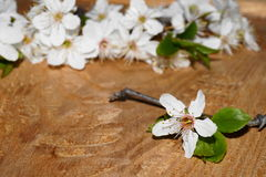 Körsbärsröda blomningar Fotografering för Bildbyråer