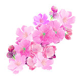Körsbärsröda blomningar för vattenfärg Arkivbild