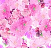 Körsbärsröda blomningar för vattenfärg royaltyfri illustrationer