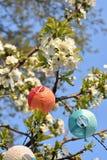 Körsbärsröda blomningar med ballonglampor royaltyfri foto