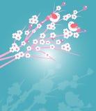 Körsbärsröda blomningar med fåglar Royaltyfria Foton