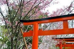 Körsbärsröda blomningar och den Torii porten i Hirano Jinja förvarar, Kyoto Royaltyfri Foto