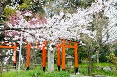 Körsbärsröda blomningar och den Torii porten i Hirano Jinja förvarar, Kyoto Arkivfoton