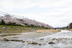 Körsbärsröda blomningar på banken längs den Takano floden, Kyoto, Japan Arkivfoton