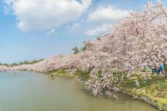 Körsbärsröda blomningar på den Hirosaki slotten Royaltyfri Fotografi