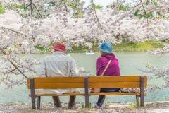 Körsbärsröda blomningar på den Hirosaki slotten Royaltyfri Bild