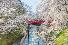 Körsbärsröda blomningar på den Hirosaki slotten royaltyfria foton