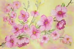 Körsbärsröda blomningar på en gul bakgrund Royaltyfri Foto