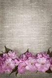 Körsbärsröda blomningar på linnebakgrund Royaltyfri Fotografi