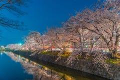 Körsbärsröda blomningar på natten Royaltyfri Fotografi
