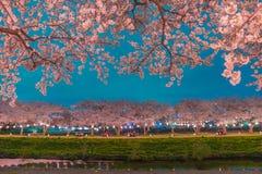 Körsbärsröda blomningar på natten Arkivfoton