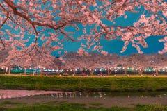 Körsbärsröda blomningar på natten Royaltyfri Foto