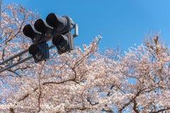 Körsbärsröda blomningar runt om Chidorigafuchi parkerar, Tokyo, Japan royaltyfri foto
