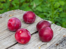 Körsbärsröda plommoner Royaltyfri Fotografi