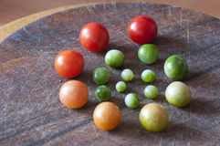 Körsbärsröda tomater av olik mognad, livcirkulering Arkivbilder