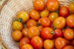 Körsbärsröda tomater i vide- korg Arkivfoton