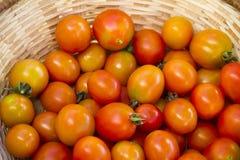 Körsbärsröda tomater i vide- korg Royaltyfri Fotografi