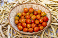 Körsbärsröda tomater i vide- korg Arkivfoto