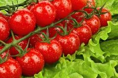 Körsbärsröda tomater på bladet av sallad Arkivfoton