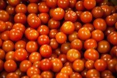 Körsbärsröda tomater på skärm Arkivbilder