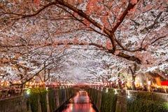 Körsbärsröda träd längs den Meguro floden, Meguro-ku, Tokyo, Japan är tänder upp i aftnarna av våren Arkivbild
