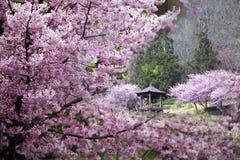 Körsbärsröda trees på en ny grön lawn arkivbild