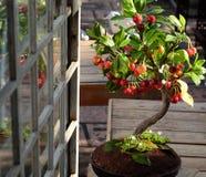 Körsbärsrött träd från lera, handgjord bonsai Arkivfoto