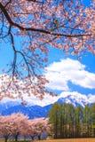 Körsbärsrött träd och berg Arkivfoto