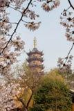 Körsbärsrött träd, pagod Fotografering för Bildbyråer