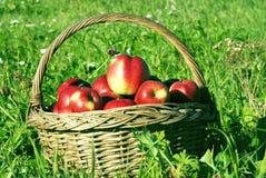 Köstliche Äpfel Stockbilder