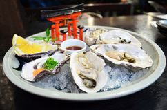 Köstliche Austern Stockbild