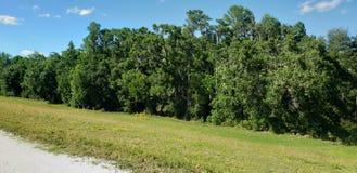 Köstliche Bäume und Ebenen lizenzfreie stockfotografie