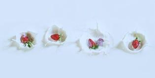 Köstliche Erdbeeren, die unten in Milch mit Tropfen sinken stockbild