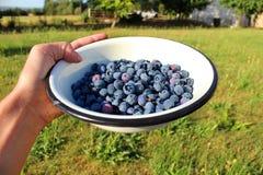 Köstliche frische reife Blaubeeren Lizenzfreies Stockbild