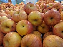 Köstliche gelbliche Äpfel Stockbild