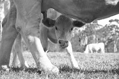 Köstliche Milch Stockbilder