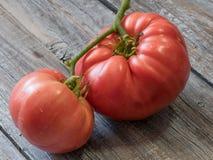 Köstliche organische rote Tomaten Tomaten auf altem Holztisch Stockfoto