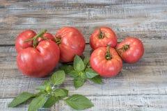 Köstliche organische rote Tomaten Tomaten und Basilikum auf altem hölzernem Lizenzfreies Stockbild