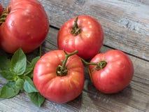 Köstliche organische rote Tomaten Tomaten und Basilikum auf altem hölzernem Stockbilder