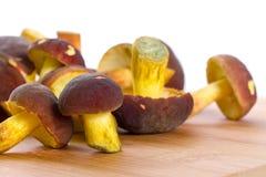 Köstliche Pilze für Abschluss oben kochen Lizenzfreie Stockbilder