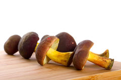 Köstliche Pilze für das Kochen Stockfotos
