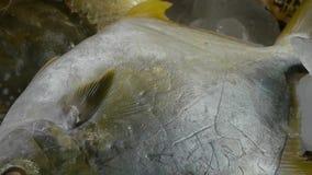 Köstliche Quakfisch-Butterfische fischen u. kratzen, innerhalb der Skalaplatte Fischereieis eingefroren stock video footage