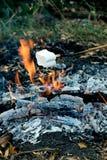 Köstliche und süße Eibische auf Stock über dem Feuer lizenzfreie stockfotografie