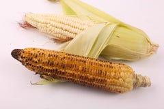 Köstlicher gebratener Mais stockfoto