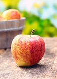 Köstlicher roter und gelber Apfel lizenzfreie stockfotos