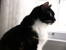 Küche-Katze 2 Stockfotografie