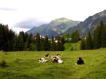 Kühe in Alpes Lizenzfreies Stockfoto